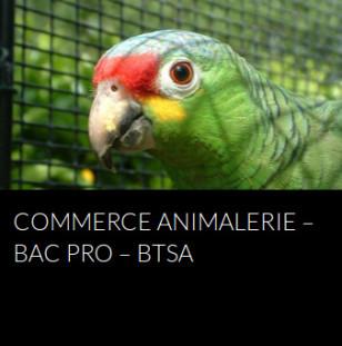 commerce-animalerie-bac-pro-bts